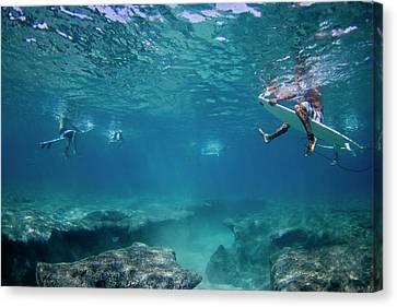 Reef Surfers Canvas Print by Sean Davey