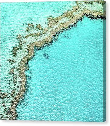Reef Textures Canvas Print by Az Jackson
