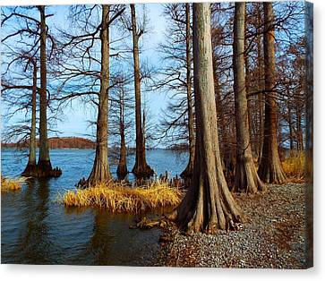 Reelfoot In Winter Canvas Print by Julie Dant