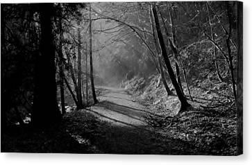 Reelig Forest Walk Canvas Print