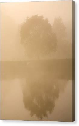 Reflected Gum Sunrise Canvas Print by Mike  Dawson