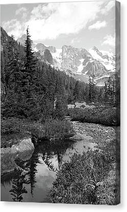 Reflected Pine Canvas Print