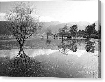 Reflected Trees Canvas Print