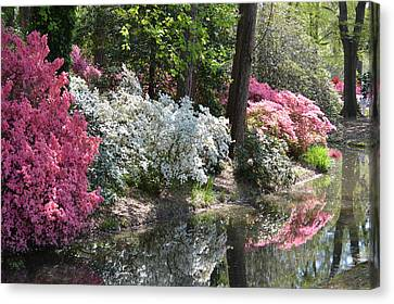 Reflecting Azaleas Canvas Print