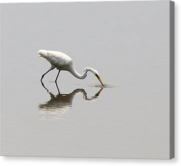 Reflecting Egret Canvas Print by Al Powell Photography USA