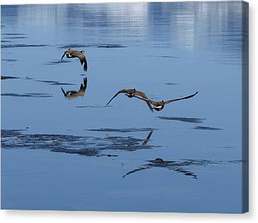 Reflecting Geese Canvas Print