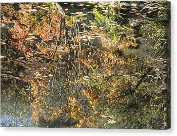 Reflecting Gold Canvas Print