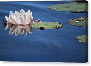 Canvas Print featuring the photograph Reflecting In Blue Water by Amee Cave