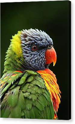 Parrots Canvas Print - Reflecting In The Rain by Lesley Smitheringale