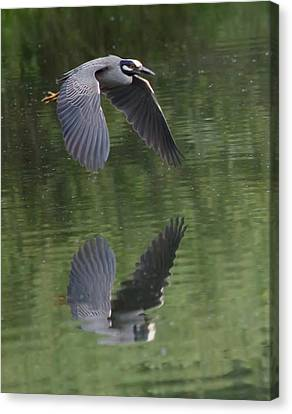 Reflecting On Flight Canvas Print by Shane Bechler