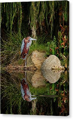 Reflecting On Lunch Canvas Print