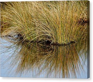 Reflecting Reeds Canvas Print by Marty Koch