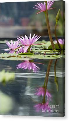 Aquatic Plant Canvas Print - Reflecting Waterlily  by Tim Gainey