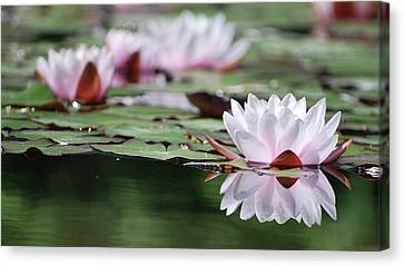 Canvas Print featuring the photograph Reflection by Amee Cave