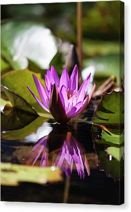 Canvas Print featuring the photograph Reflection In Fuchsia by Suzanne Gaff