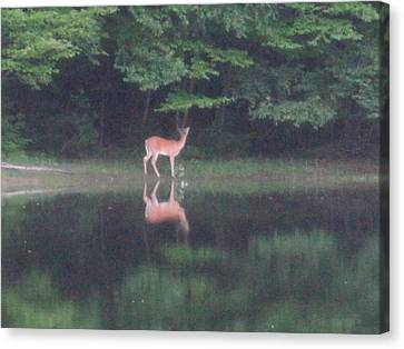 Reflection Canvas Print by Jeffrey Koss