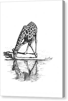 A Tall Drink Of Water Canvas Print by Jennifer Campbell Brewer
