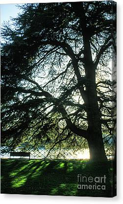 Reflection Light And Shadow Canvas Print by Gregory Schultz