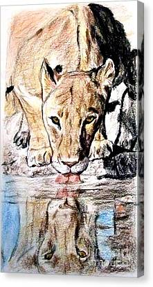 Canvas Print featuring the drawing Reflection Of A Lioness Drinking From A Watering Hole by Jim Fitzpatrick