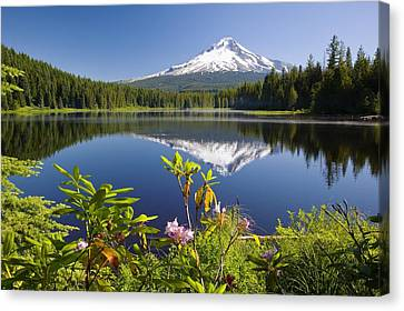 Reflection Of Mount Hood In Trillium Canvas Print by Craig Tuttle