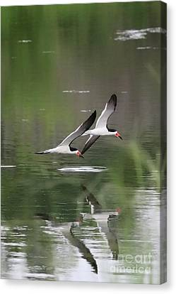 Reflection Of Skimmers Over The Pond Canvas Print