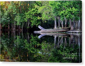 Reflection Off The Withlacoochee River Canvas Print by Barbara Bowen