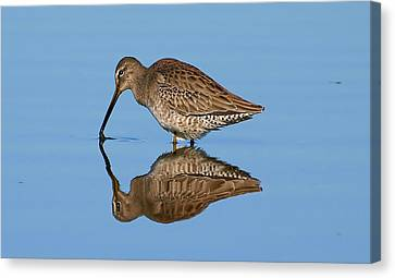 Reflection Shot  Canvas Print by Kala King