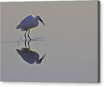Reflections Canvas Print by Brian Wright