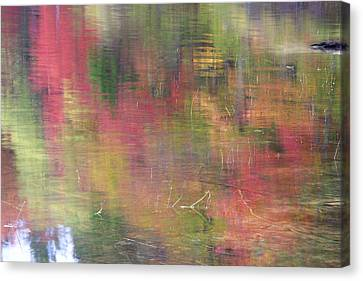 Reflections Canvas Print by Catherine Alfidi