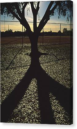 Reflections In A Park Canvas Print