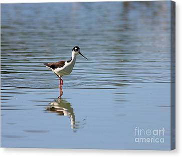 Reflections Of A Black Necked Stilt 2 Canvas Print by Wingsdomain Art and Photography