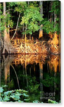 Reflections Of Our Roots Canvas Print by Lora Wood