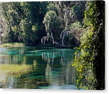 Reflections Of Rainbow Springs 2 Canvas Print