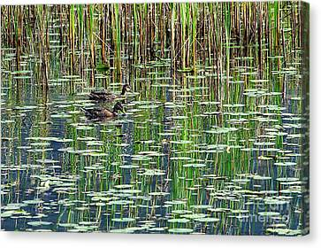 Reflections On Duck Pond Canvas Print by Sharon Talson