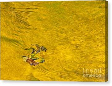 Reflections On Trout Creek Canvas Print by Greg Vaughn - Printscapes