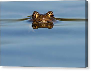 Frog Canvas Print - Reflections - Toad In A Lake by Roeselien Raimond
