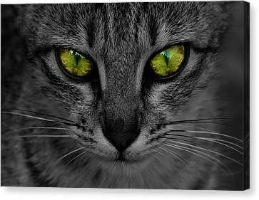 Reflective Cat Eyes Canvas Print