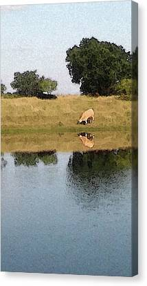 Reflective Cow Canvas Print