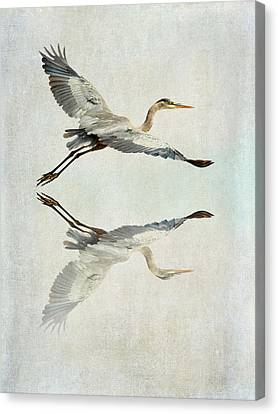 Reflective Flight Canvas Print by Fraida Gutovich