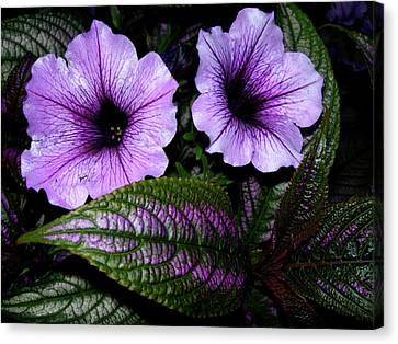 Reflective Infusion Canvas Print by Randy Rosenberger