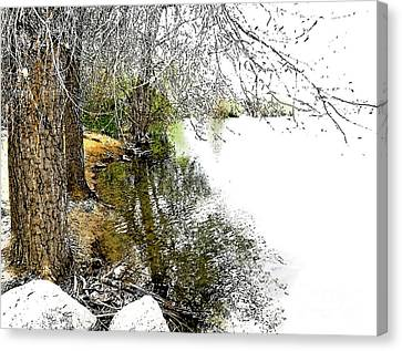 Reflective Trees Canvas Print