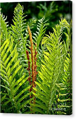 Refreshing Fern In The Woodland Garden Canvas Print