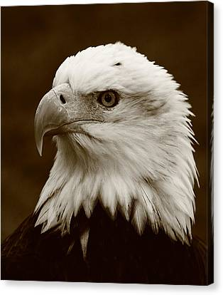 Regal  Eagle Canvas Print