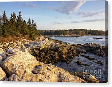Reid State Park #2 Canvas Print by Benjamin Williamson