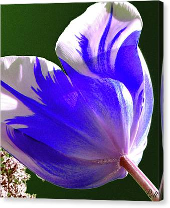 Reigning Tulips Canvas Print by Christine Belt