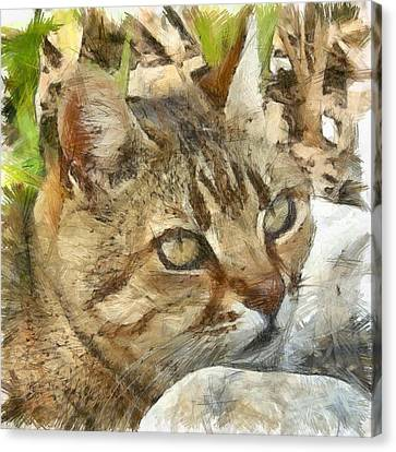 Relaxed Tabby Cat Resting In Garden Canvas Print