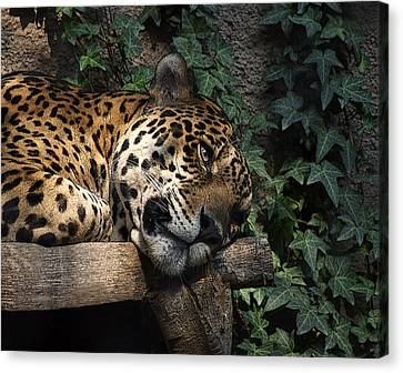 Relaxing Canvas Print by Ernie Echols