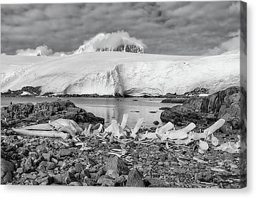 Remains Of A Giant Canvas Print by Alan Toepfer