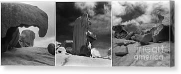 Kangaroo Canvas Print - Remarkable Rocks by Linda Lees
