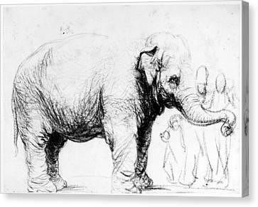 Rembrandt: Elephant, 1637 Canvas Print by Granger